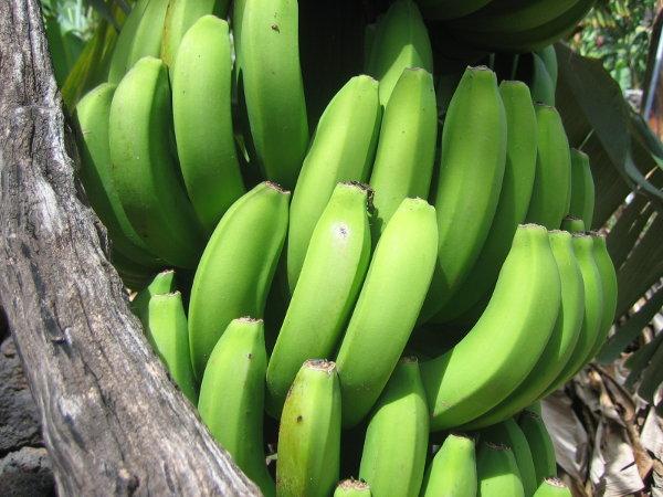 La Palma - Bananen