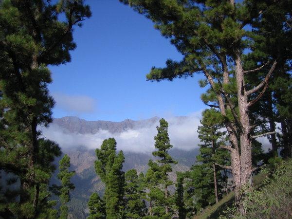 La Palma - in der Kiefernzone