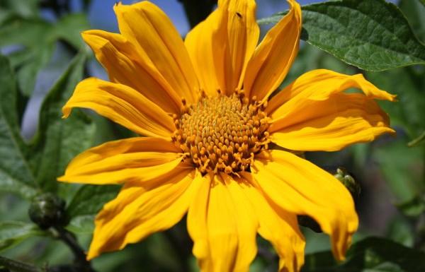 Blumen La Palma: Unbekannt